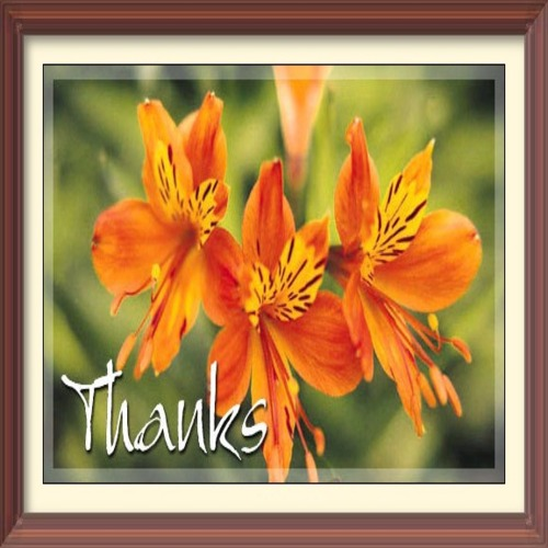 Thanks Framed For You.
