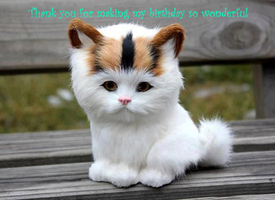 Cute Kitty Thank You!