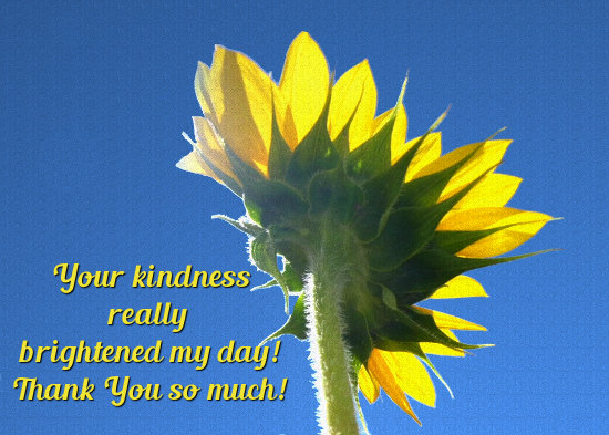 Thank You For Your Kindness, Sunflower.